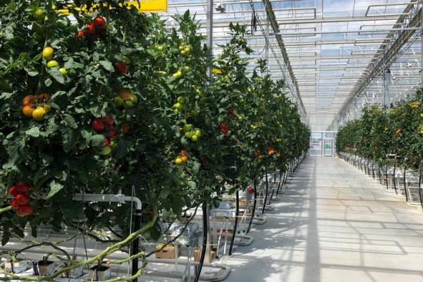 VB completes 10ha. climate-controlled greenhouse in Siberia