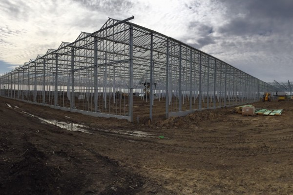VB starts phase 1 for MightyVine Tomatoes in Rochelle IL