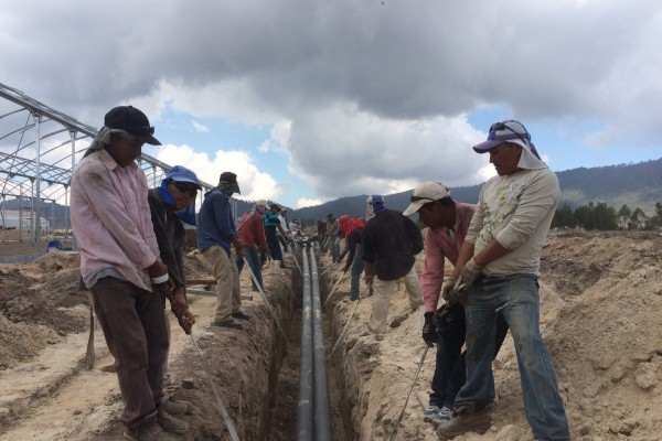 Update project conducted by VB for HFT Seed Services in Guatemala